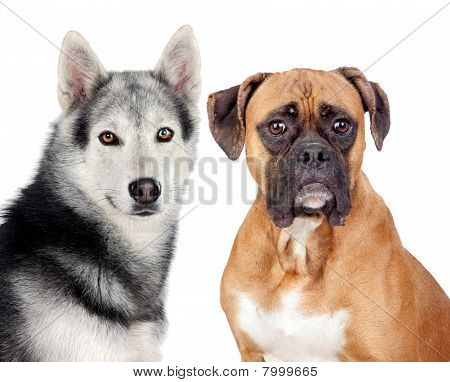 Two Dogs Of Different Breeds