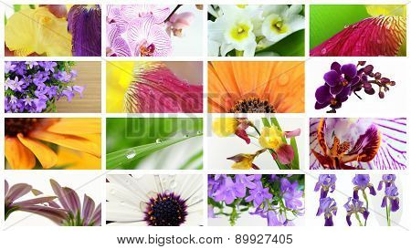 Various kind of colorful flowers grid collage poster