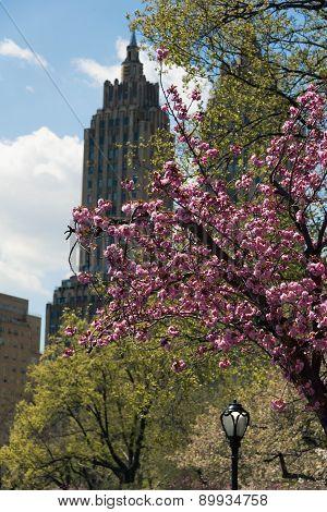 Cherry Blossom And The Eldorado On Cenral Park West
