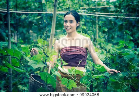Asia Beautiful Woman And Basket  Harvesting Containing Zucchini