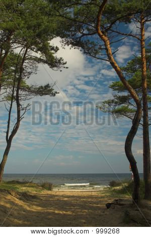 beach in poland baltic sea in summer poster