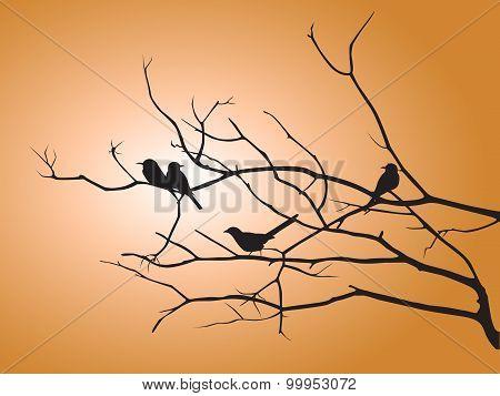 Black shadow bird and tree branch on orange sun light vector design