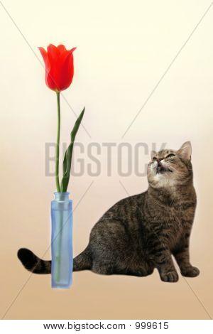 Cat&Flower