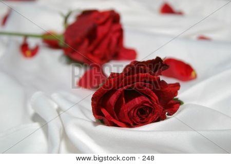 Roses On Silk