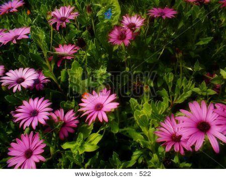 Flowers Alive