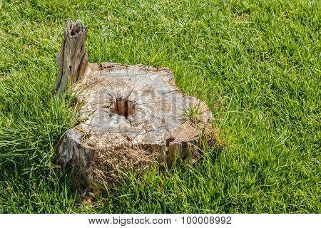 Old Stump Tree Plant On Green Grass Field.