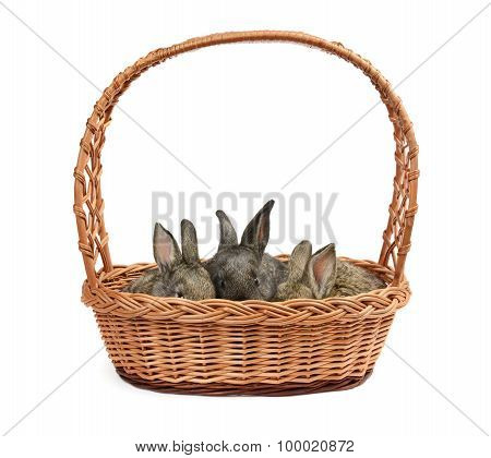 Rabbits In A Basket