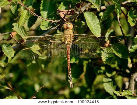 Dragonfly Sitting On The Grass