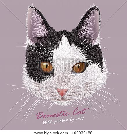 Vector Portrait of Young Domestic Cat