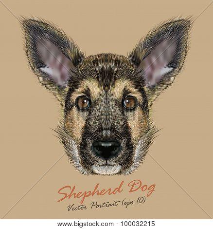 Vector Portrait of Shepherd Dog