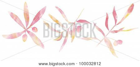 Tender toned watercolour sandthorn berries and leaves, three drawings on white background