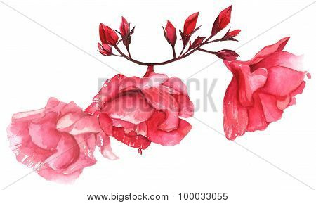 A vintage style watercolour drawing of a branch of pink peonies on white background