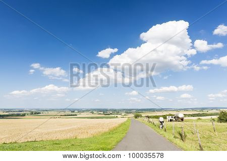 Country Road And Summer Landscape, Germany