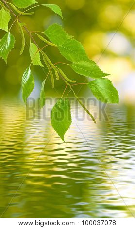 Image  Of Branches Over The Water