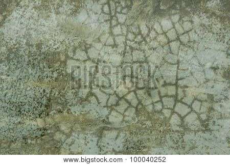 Cement wall for background.