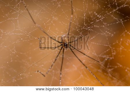 Macro spider on the web