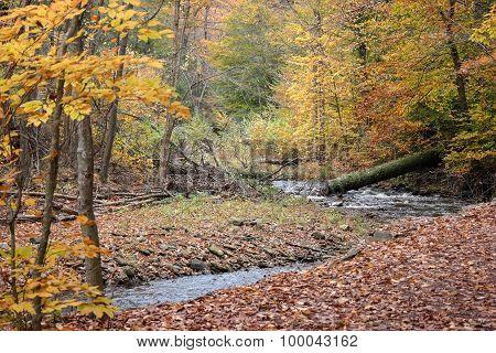 Pennsylvania Ricketts Glen State Park Landscape