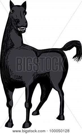 Single Black Horse