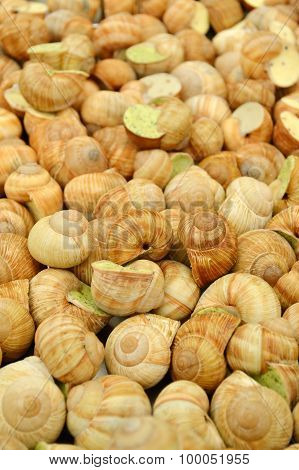 Tasty cooked snails