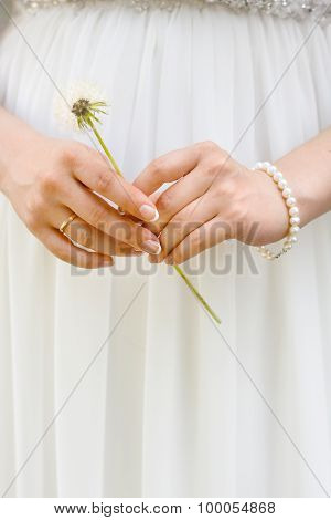 Hands Of The Bride With The Dandelion