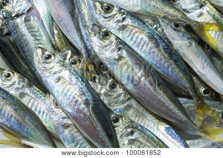 Raw fish (scad) over natural wood background.Close up