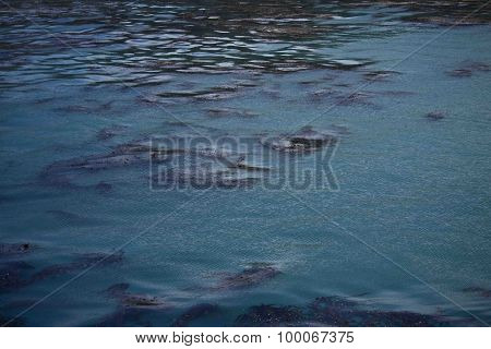 Sea Surface with Floating Seaweed