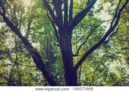 Vintage Photo Of Abstract Background Of Green Tree Branches