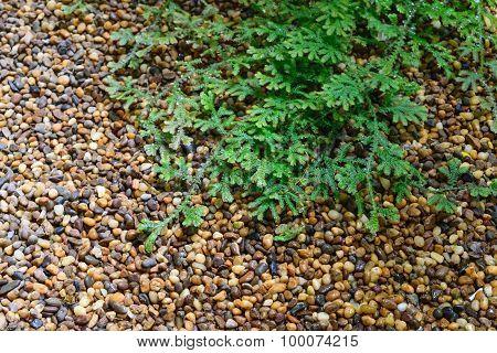 Stone Floor Texture With Plant