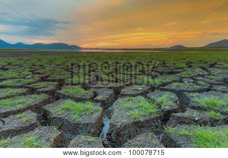 Dried Ground with green grass texture during sunset