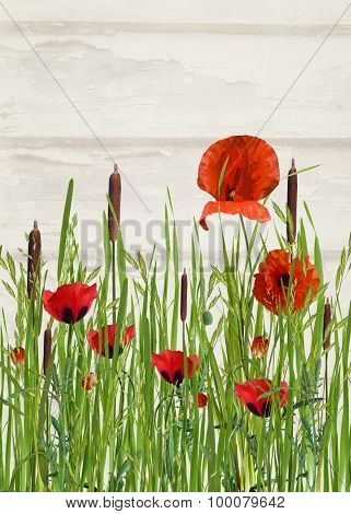 orange poppy and cattails