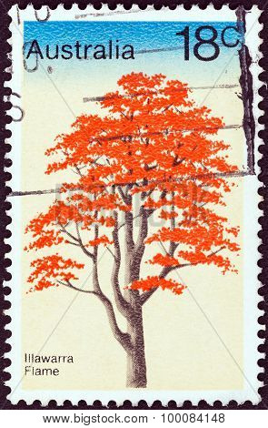 AUSTRALIA - CIRCA 1978: A stamp printed in Australia shows Illawarra Flame Tree