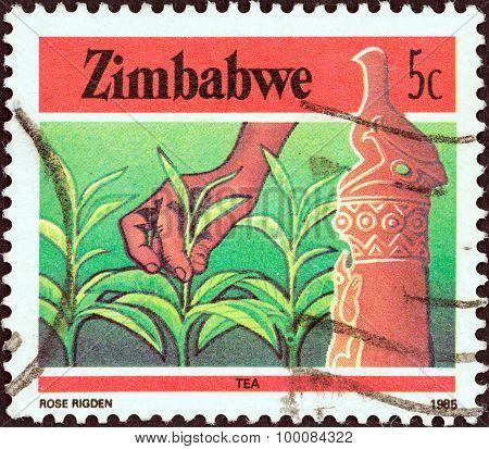 ZIMBABWE - CIRCA 1985: A stamp printed in Zimbabwe from the