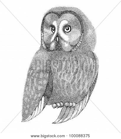 Sketch Owls Drawn With Pen And Ink In A Graphic Style Drawing Points And Lines. Beautiful Figure For