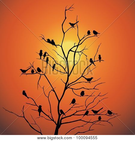 Birds and tree branch backlit sunlight  silhouette vector design