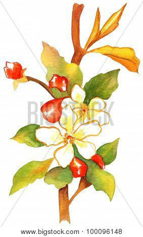 A retro-styled watercolor drawing of a branch of abstract white and red flowers