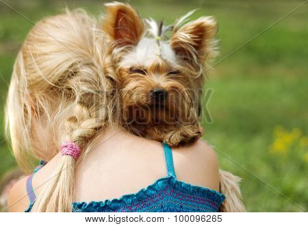 Yorkshire Terrier On Shoulder Of 6 Year Old Girl. Looking Into The Camera