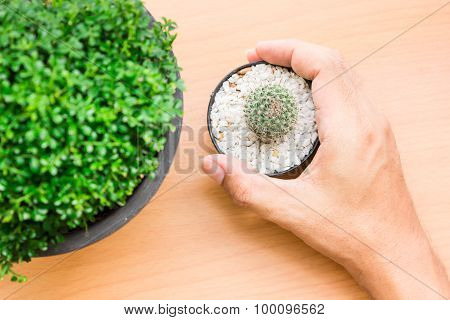Hand holding a green tree on a wooden table. Show to live with natural harmony