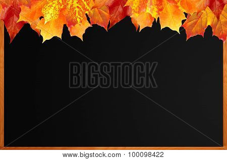 Blank Blackboard With Wood Frame And Autumn Maple Leaves As Background