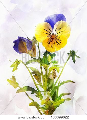 Watercolor Pansy Flower (viola Tricolor)