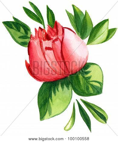 A vintage-styled watercolour drawing of a red rose on white background