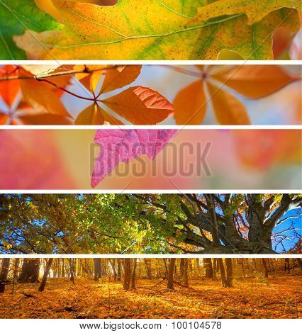 Collection of Autumn Headers - colorful fall season amazing  backgrounds for your website