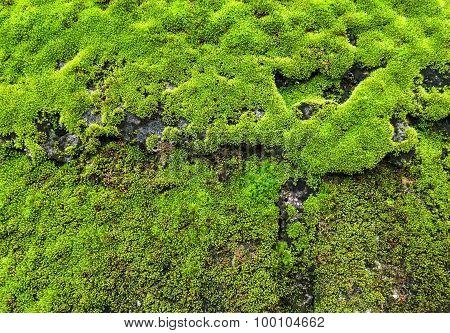 Fresh Lichen