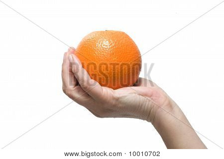 hand holding an orange isolated on white background
