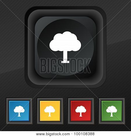 Tree, Forest  Icon Symbol. Set Of Five Colorful, Stylish Buttons On Black Texture For Your Design. V