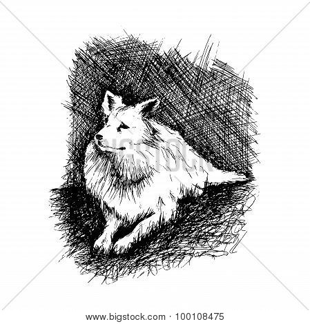 Dog In Anddrawn Engraving Style By Pen, Retro Hound