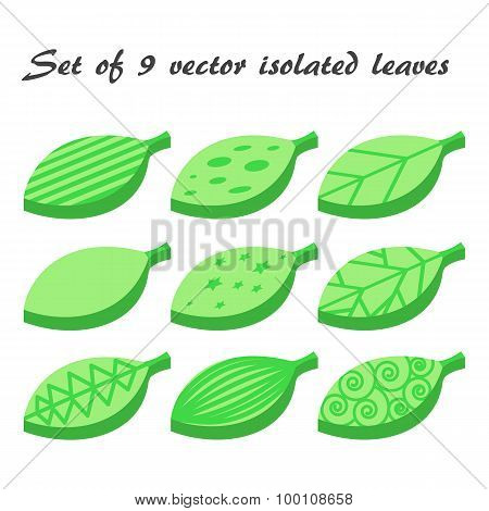 Vector Set Of 9 Green Leaves