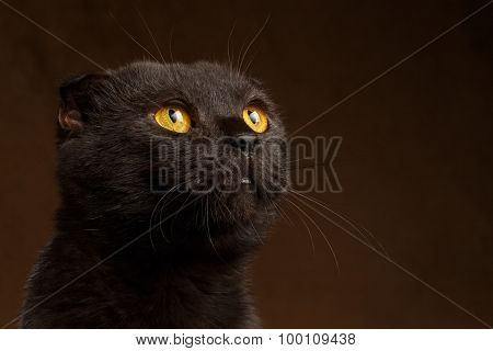 Closeup Portrait Of Grumpy Black Cat