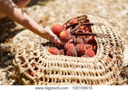 Basket With Peaches
