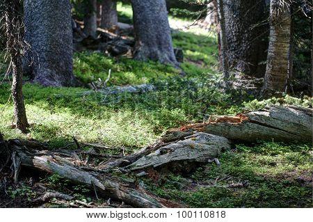 Fallen tree in sunlit field