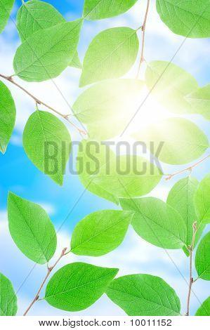 Peerson verde em dia de sol.